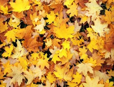 L'automne est là : traversez la saison sans encombre